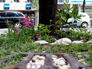 2013mai paris extra ordener guerilla gardening france pied arbre plantation4